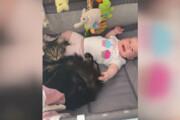 ببینید   رونمایی از عجیبترین پرستار بچه؛ یک گربه احساساتی
