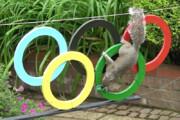 ببینید | رقابت تماشایی سنجابها در المپیک توکیو 2020