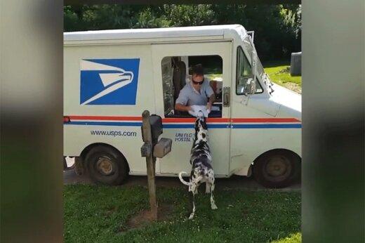 ببینید   ماجرای عجیب یک سگ با پیشنهاد کار از اداره پست آمریکا!