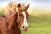 ببینید | لحظه عجیب راه رفتن یک اسب روی ۲ پا!