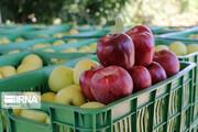 خواص فوقالعاده پنج میوه پاییزی