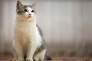 ببینید | دفاع جانانه یک گربه شجاع از خواهرش در مقابل 3 سگ