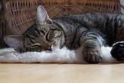 ببینید | قابی تماشایی از اقدام تحسینبرانگیز یک انسان برابر یک گربه خوابالو