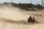 ببینید | ماجرای جوشیدن خاک در بوشهر