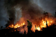 آتش بهجان جنگلهای گناوه افتاد