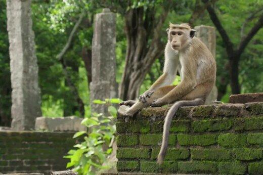 ببینید | گروگانگیری سگ و گربه توسط میمونها!