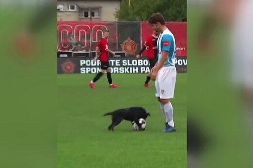 ببینید | سگ فوتبالیستی که عاشق لایی زدن به فوتبالیستهای حرفهای است!