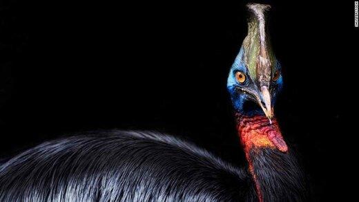 خطرناکترین پرنده جهان چیست؟