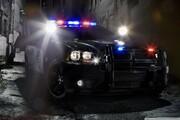 ببینید | راهبندان خبرساز پلیس برای عبور یک تنبل از جاده!