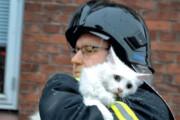 ببینید | تنفس مصنوعی به گربه نگونبخت توسط آتشنشانان فداکار
