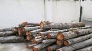 دستگیری متخلفین حین قطع درختان در گرگان