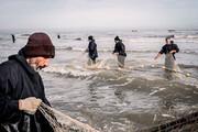 ببینید | آغاز صید ماهیان استخوانی دریای خزر