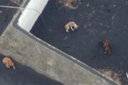 ببینید | غذا دادن به سگهای محاصره شده در گدازههای آتشفشانی با پهپاد