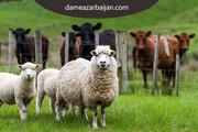 مرکز عرضه گوسفند زنده و دام بهداشتی در تهران