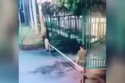 ببینید | تلاش خندهدار یک نیروی امنیتی برای بستن یک دروازه!