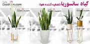 اگر به دنبال زیباترین گلهای آپارتمانی برای خانه خود هستید، این مطلب را حتما بخوانید!