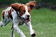 ببینید | لحظه حمله ناگهانی یک روح به سگ!